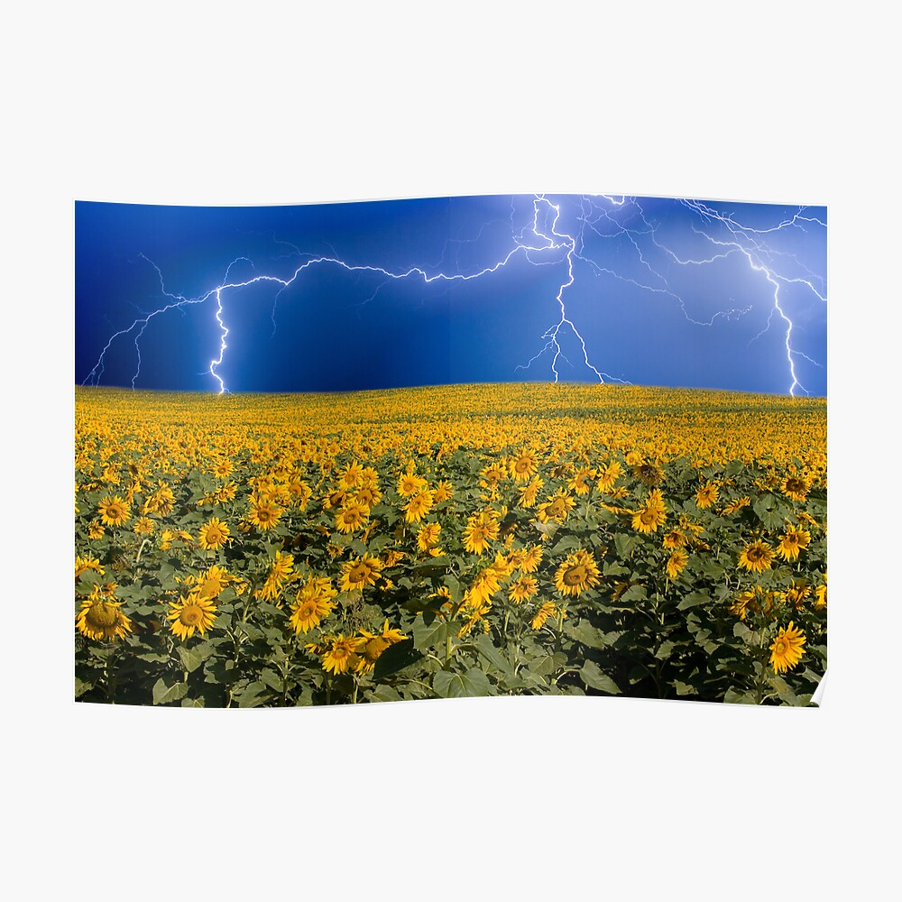 Storm on the Sunflower Field Horizon Poster