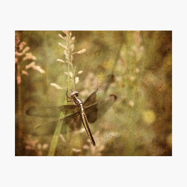 ~ Hanging Around ~ Photographic Print