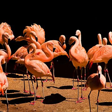 Flamingos by pursuits