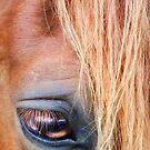 ~ Eye of the Beholder ~ by Bobby Strange