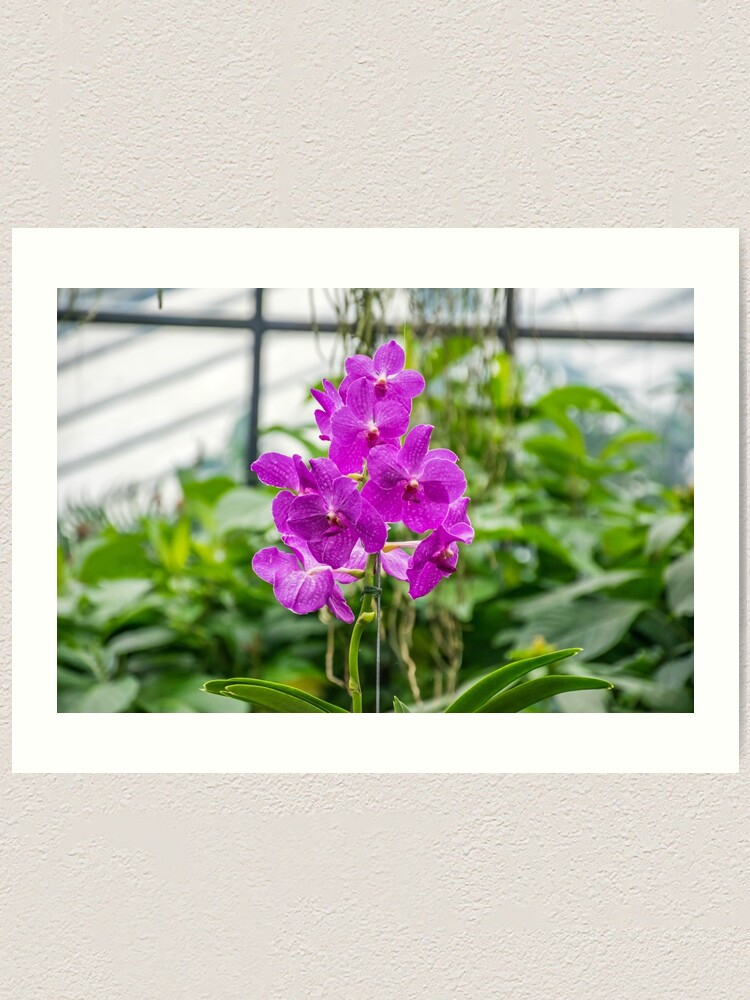 Alternate view of Orchids up close Art Print