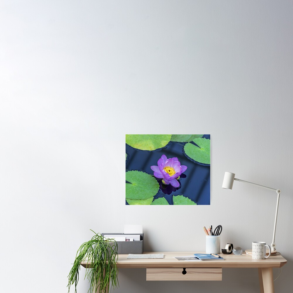 Purple waterlily up close Poster