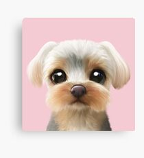 Sarang the Yorkshire Terrier Canvas Print