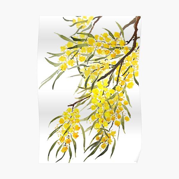 golden wattle flower watercolor Poster