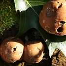 Sunny Puffballs by Adam Bykowski