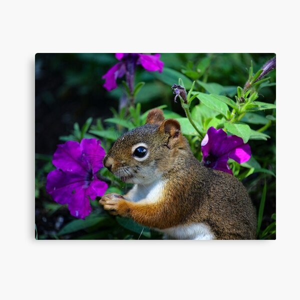 Red squirrel and flowers Canvas Print