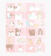 Meme cats Photographic Print
