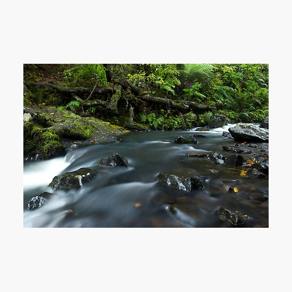 Kauri Roots. Photographic Print