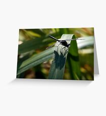 Dot-Tailed Whiteface Sunning Itself on Grass Leaf Greeting Card