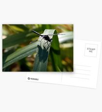Dot-Tailed Whiteface Sunning Itself on Grass Leaf Postcards