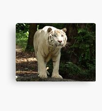 "White Tiger ""Omar"" Canvas Print"
