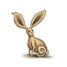 Little Hare by Rachel Blackwell