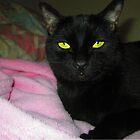 Irina The Cat Skirt by Bearie23