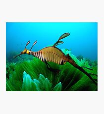 The unicorn of the ocean Photographic Print