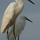 birds by Bernhard Matejka