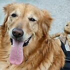 Goldie and Friend! by Heather Friedman