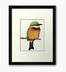 Little Bee-Eater Framed Print
