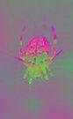 Neon pink macro spider by errorface