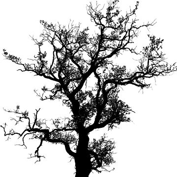 Old Tree by Reethes