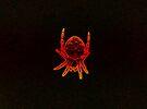 Neon sunburst macro spider by errorface