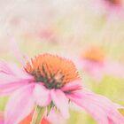 Pink Coneflower Fields by gingerfancy