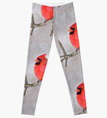 Northern Cardinal Leggings