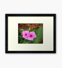 Early Morning Pink Flowers Framed Print