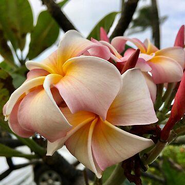 Kauai Plumeria by Mangomok