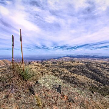 Grass Trees by DVJPhotography