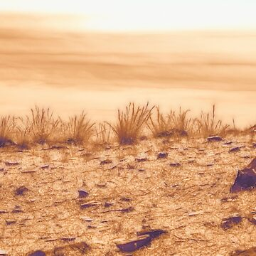 Desert Grass by DVJPhotography
