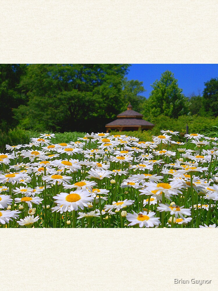 Pushing Up Daisies by bgaynor