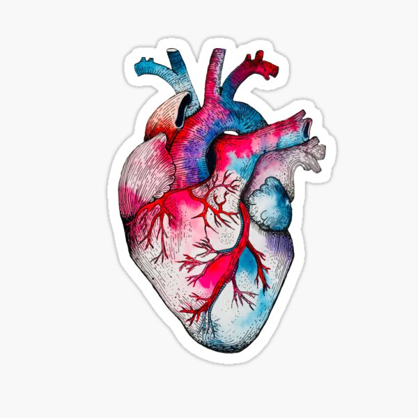 My Candy Coloured Heart - anatomical heart watercolour and pen Sticker