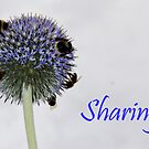 sharing ... by SNAPPYDAVE