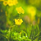 185 - Spring by CarlaSophia