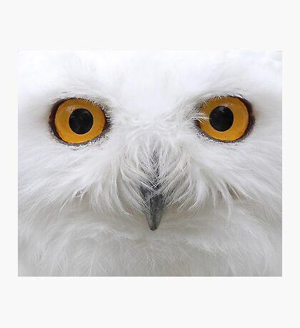 Snowy Eyes - Snowy Owl Photographic Print