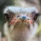 You looking' at me? by vfphoto