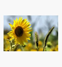 Bright Day OHP Photographic Print