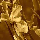 Sepia flowers by jammingene