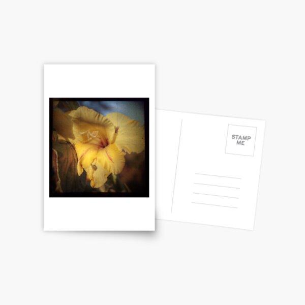 In The Spotlight Postcard
