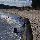 Beachwood Along The Shore by OntheroadImage