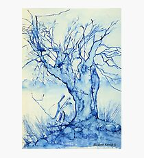 A tree in the veld Photographic Print