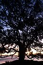 Sunset Tree. by Michael Treloar