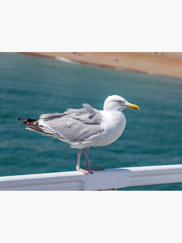 Seagull on railings at the seaside by tdphotogifts