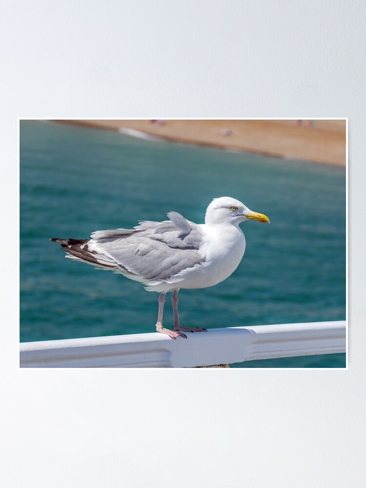 Alternate view of Seagull on railings at the seaside Poster