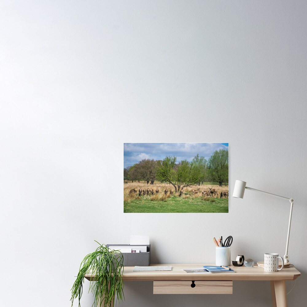 Deer in Richmond Park, London Poster