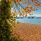 AUTUMN ALL OVER THE BEACH by Elaine Bawden