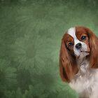 Dog breed Cavalier King Charles Spaniel by bonidog