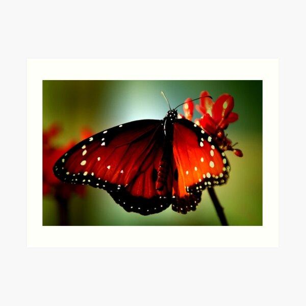 ~Just like a butterfly... Art Print