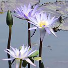 purple lilies by anaivette64