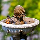 American Robin male bird bathing in garden water fountain on a sunny day by davidgnsx1